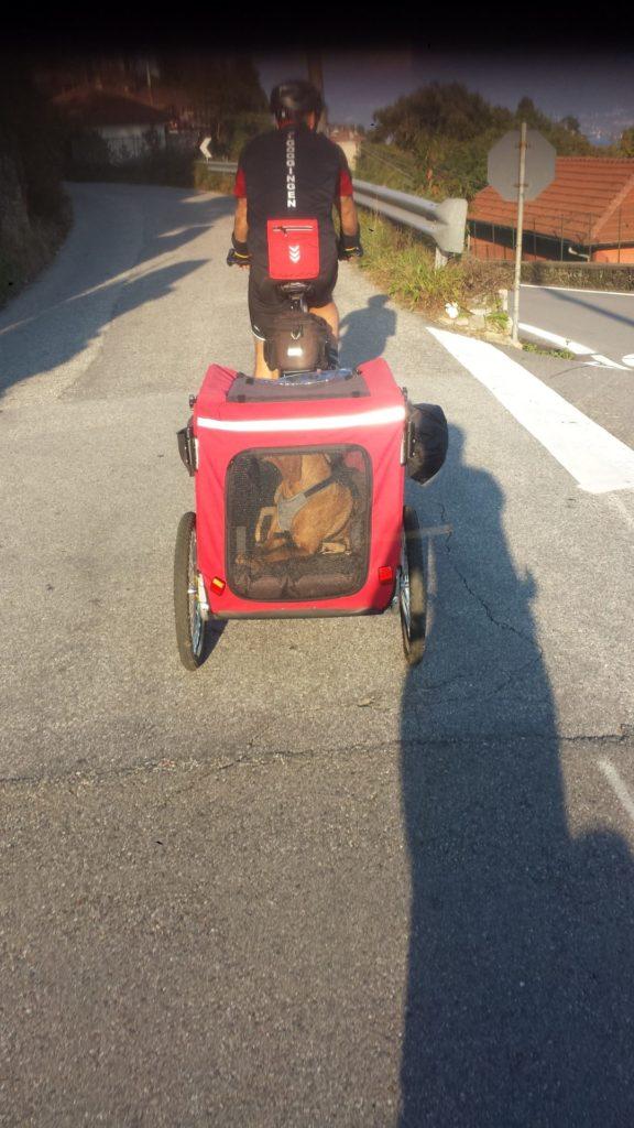 Fahrradanhänger Hunde